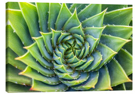 Canvas print  Green spiral - Christian Müringer