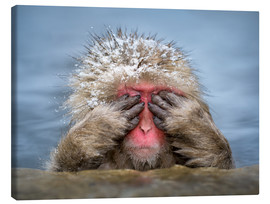 Canvas print  Japanese snow monkey in Jigokudani Monkey Park while bathing - Jan Christopher Becke
