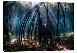 Canvas  Beams of sunlight in a mangrove forest - Ethan Daniels