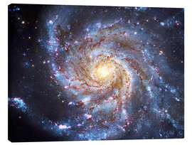 Canvas print  The Pinwheel Galaxy at Ursa Major - Robert Gendler