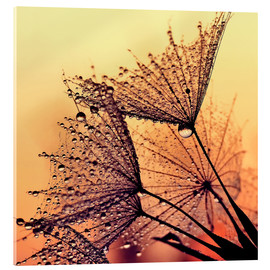 Acrylic print  Dandelion sunset dream - Julia Delgado