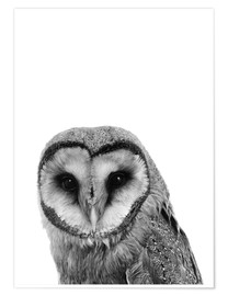 Premium poster  The owls are not what they seem - Finlay and Noa