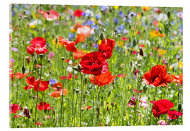 Acrylic print  Summer Meadow 3 - Suzka