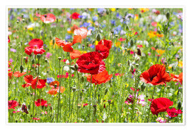 Premium poster Summer Meadow 3