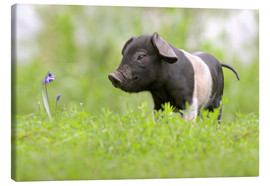 Canvas print  Little Baby Pig - WildlifePhotography