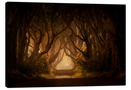 Canvas print  Sunny morning in Dark Hedges - Jaroslaw Blaminsky