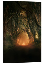 Canvas print  Dark Hedges in the morning sunlight - Jaroslaw Blaminsky