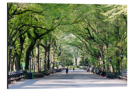 Aluminium print  The Mall in spring, Central park, New York city, USA - Matteo Colombo