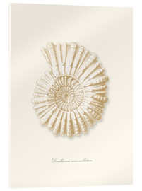 Acrylic print  Amonite spiral - Patruschka