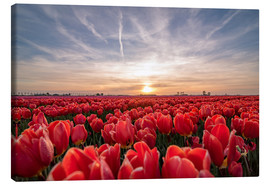 Canvas print  Tulips sunset landscape - Remco Gielen