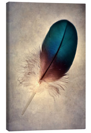 Canvas print  Blue parrot feather - Jaroslaw Blaminsky