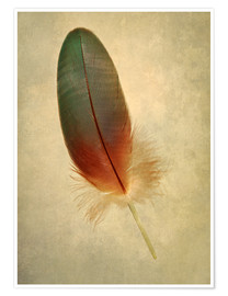 Premium poster Green parrot feather