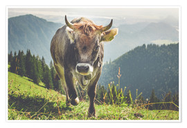 Premium poster  Cow in the mountains - Michael Helmer