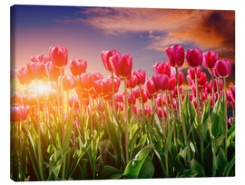 Canvas print  Tulip field in the evening light