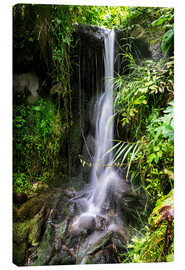 Canvas print  Waterfall in Harz - Dennis Stracke