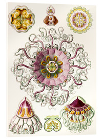 Acrylic print  Crown quill, periphylla periphylla - Ernst Haeckel
