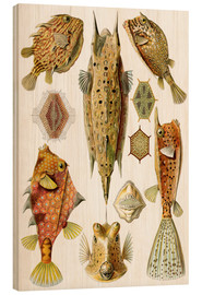 Wood print  Ostraciontes cowfish species - Ernst Haeckel