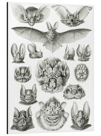 Aluminium print  Bats (Forms of nature, graphic 67) - Ernst Haeckel