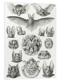 Foam board print  Bats (Forms of nature, graphic 67) - Ernst Haeckel