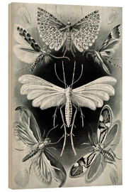 Wood print  Plate of moths - Ernst Haeckel