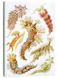 Canvas print  Nudibranches, artistic forms of nature, design 43. - Ernst Haeckel