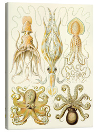 Canvas print  Squid and octopi - Ernst Haeckel