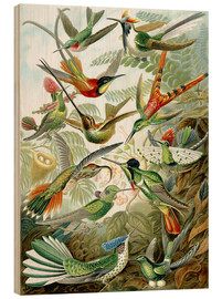 Wood print  Trochilidae hummingbirds - Ernst Haeckel