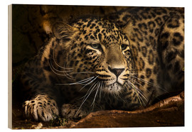 Wood print  Leopard on the lookout - Edith Albuschat