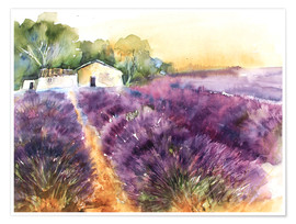 Premium poster Lavender field in Provence