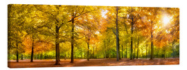 Canvas  Colorful autumn forest in sunlight - Jan Christopher Becke