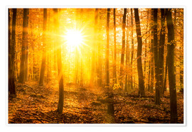 Premium poster Autumn forest in the backlight