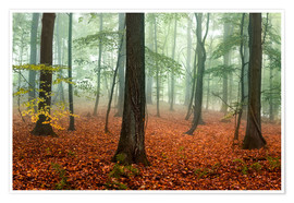 Premium poster Red autumn leaves and fog in the forest