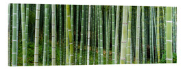 Acrylic glass  Green bamboo forest in Kyoto, Japan - Jan Christopher Becke