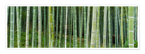 Premium poster Green bamboo forest in Kyoto, Japan