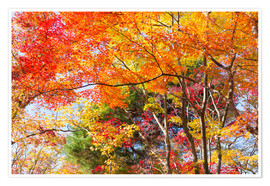 Premium poster Colorful autumn leaves in the forest