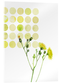 Acrylic glass  Field Sowthistle in dots - Verbrugge Watercolor