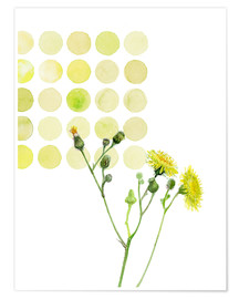 Premium poster Field Sowthistle in dots