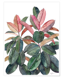Premium poster  Rubber Plant - Micklyn Le Feuvre
