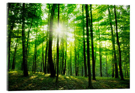 Acrylic print  Sunlight in the green forest, spring time