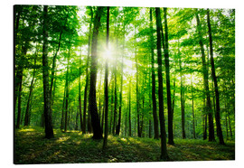 Aluminium print  Sunlight in the green forest, spring time