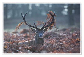 Premium poster Deer stag in the brushwood
