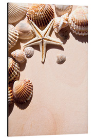 Aluminium print  Starfish and shells