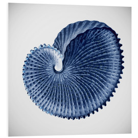 Foam board print  Seashell - Mandy Reinmuth