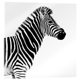 Acrylic print  Zebra on white - Philippe HUGONNARD