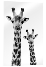 Acrylic glass  Safari Profile Collection - Portrait of Giraffe and Baby White Edition IV - Philippe HUGONNARD