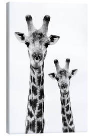 Canvas  Safari Profile Collection - Portrait of Giraffe and Baby White Edition IV - Philippe HUGONNARD