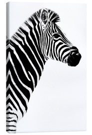 Canvas print  Zebrastute in profile - Philippe HUGONNARD