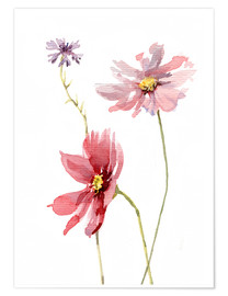 Poster  Cosmos flower and Cornflower - Verbrugge Watercolor