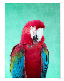 Premium poster  Tropical Macaw bird art poster - Alex Saberi