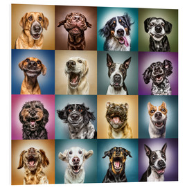 Foam board print  Funny dog faces - Manuela Kulpa